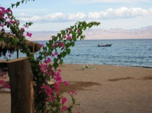Camp am Meer mit Bougainvillea
